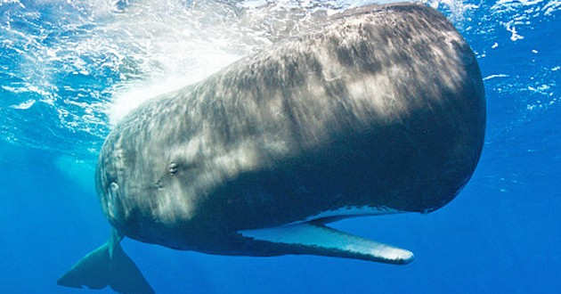 """Researchers Answer Weird Question About """"Moby Dick"""""""