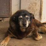 World's oldest dog dies aged 30, in her sleep