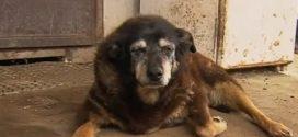 World's oldest dog dies aged 30; in her sleep