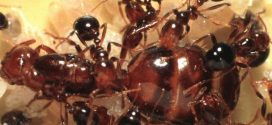 "Alabama Woman killed by fire ants day after her mother dies ""Report"""