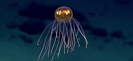 Alien Jellyfish Discovered By Deep Sea Researchers (Video)
