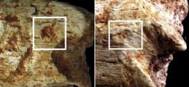 Archaeologists solve carnivorous killing of 'Moroccan Grotte' a Hominids hominin