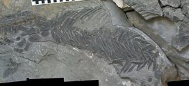 Bizarre fossil find points to rapid evolution of marine reptiles after mass extinction