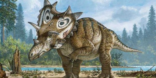 Judith: Researcher Discovers New Species Of Dinosaur In Montana