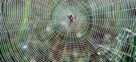 Liquid wire material inspired by spiders silk (Video)