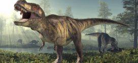 New Research Makes T. Rexes A Bit Less Terrifying