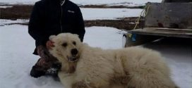 Rare Grizzly-polar bear hybrid believed killed in Canada (Photo)