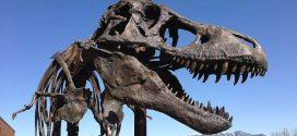 Tyrannosaurus Rex likely had lips, says Toronto paleontologist