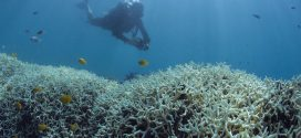 Global Coral Bleaching Continues For a Record Third Year, Scientists Say