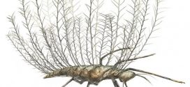 Insects used bizarre camouflage 100 million years ago, says new research