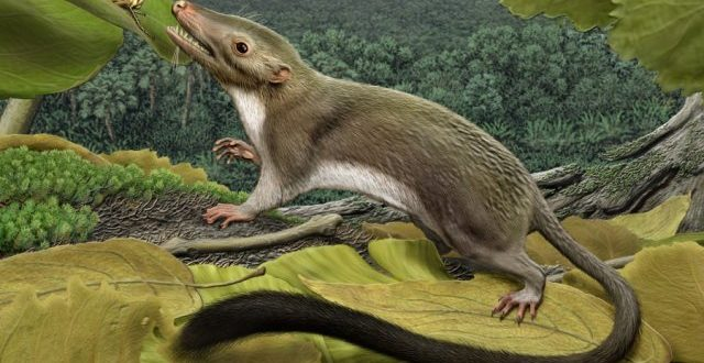 Mammals Nearly Went Extinct Along With the Dinosaurs, says new study