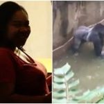 Michelle Gregg: No charges for mother of toddler who fell into gorilla cage