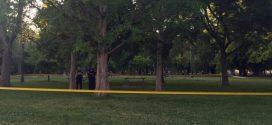 Tree branch kills man in popular Toronto park