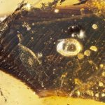Bird wings trapped in amber are a fossil first from the age of dinosaurs, new research