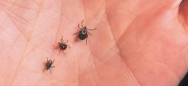 It's Tick Season: Protecting Yourself Against Lyme Disease