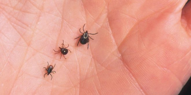 It's Tick Season: Protecting Yourself Against Lyme Disease - Canada Journal - News of the World
