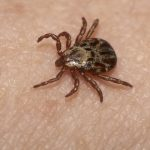 OYS with UGA Expert : Don't let ticks scare you