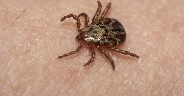 "OYS with UGA Expert: ""Don't let ticks scare you"""