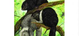 Scientists find exceptional species diversity on Philippines island
