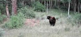 Second woman attacked by bear near Canmore