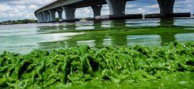 Toxic algae bloom blankets Florida beaches (Video)
