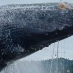 Humpback whale breach stuns kayakers (Video)