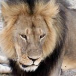 Lion mauls Granby Zoo employee, quick action saves her life