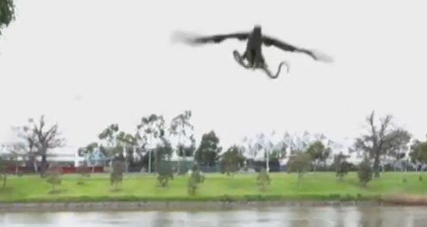 Hawk drops snake on family BBQ in Australia (Video)