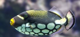 Reef Fish See Colors Humans Can Only Dream Of, says new research