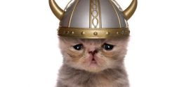Vikings Took Cats on Their Voyages, DNA Study Shows