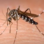 'No current risk' after mosquito that can transmit Zika found in southwestern Ontario