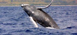 Non-profit scouts Nova Scotia coasts for whale sanctuary