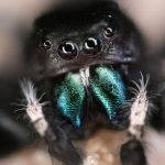 Spiders can hear you from across a room, says new research