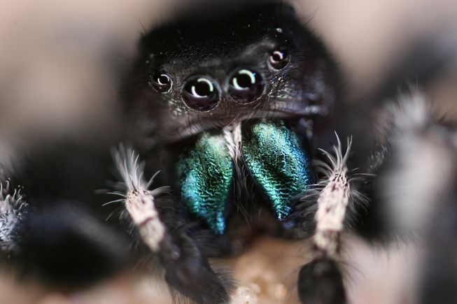 a study into the world of spiders Fear of spiders in our dna, according to new study research suggests that arachnophobia could be sown into our dna as a result of survival instincts developed by our ancestors millions of a black widow spider bite in the ancestral world could leave one incapacitated for days or.