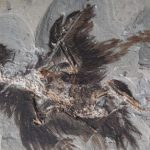 An ancient Chinese bird Fossil gives Clues to Feather Colors