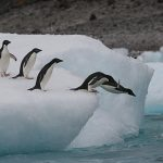 New Antarctic Marine Reserve is World's Largest, Report