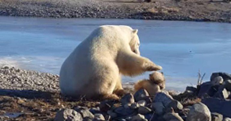 белый медведь видео фильм