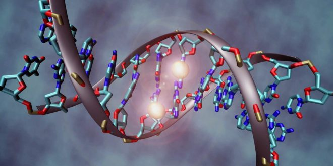 Researchers work to map human epigenome (research)