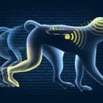 Wireless Brain Implant Allows Paralyzed Monkey To Walk Again