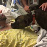 Dog visits hospital to say goodbye as owner dies (Video)