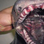Fisherman Roman Fedortsov posts pics of Russian sea monsters