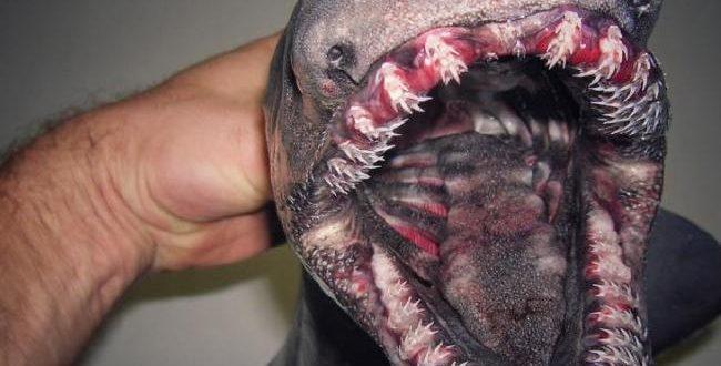 Fisherman Roman Fedortsov posts pics of Russian sea monsters (Photos)
