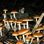 Magic mushroom drug helps people with cancer face death, Says New Study