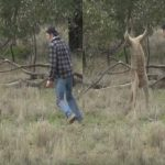 Man punches kangaroo in Australia to save his dog (Video)