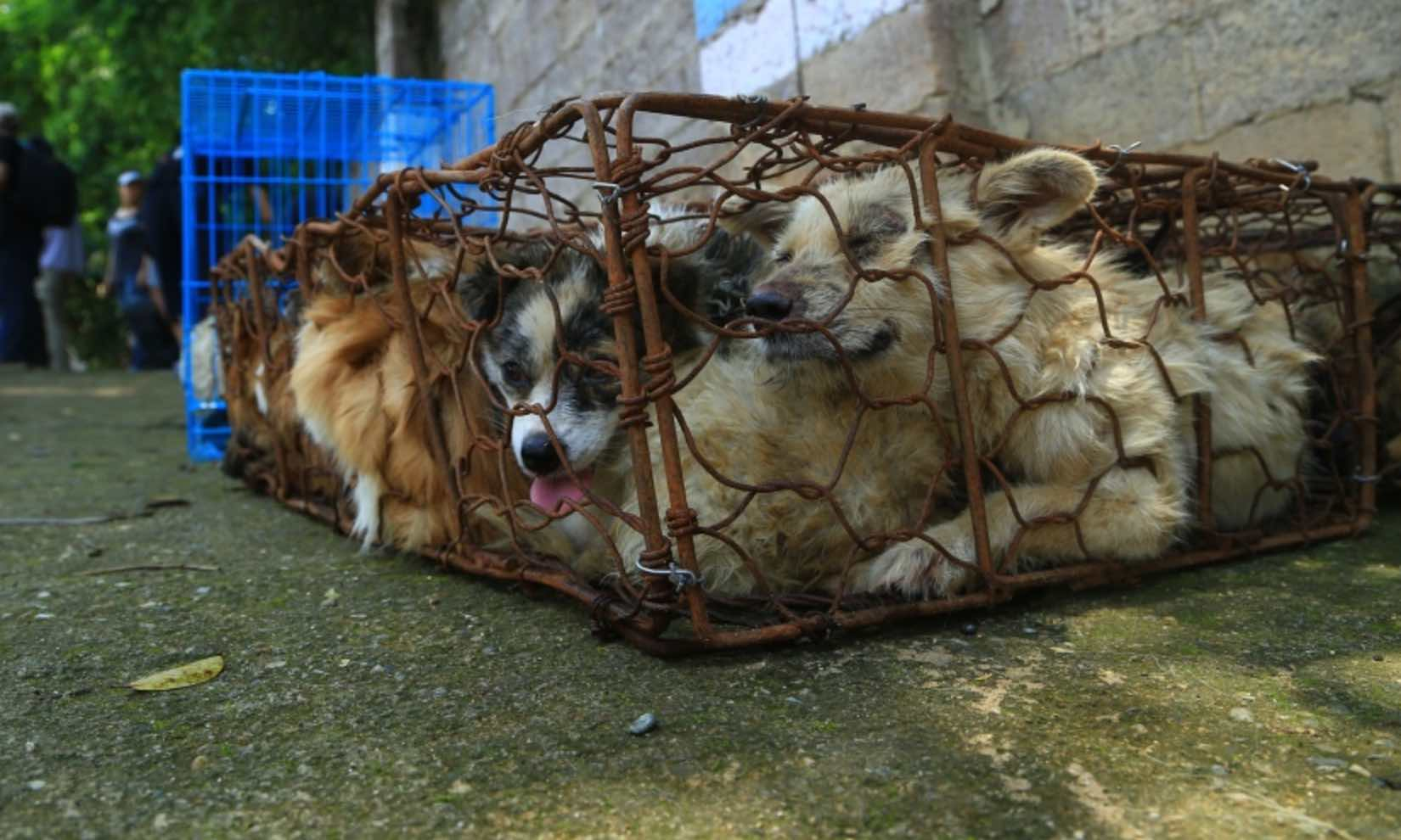 dog meat trade America: hawaii's dog meat trade continues documented evidence of hawaii's dog meat trade going back to 2004 shows stolen pets stabbed in the throat or bludgeoned across the head, then strung up and set on fire while still alive.