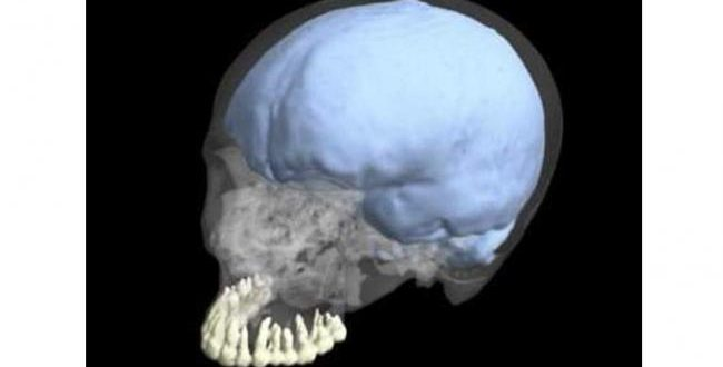 Brain and tooth size didn't co-evolve in humans, Says New Study
