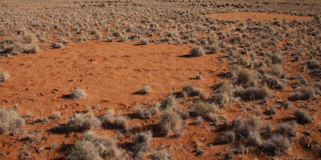 "Ecologists Provide an Explanation for the Existence of ""Fairy Circles"""