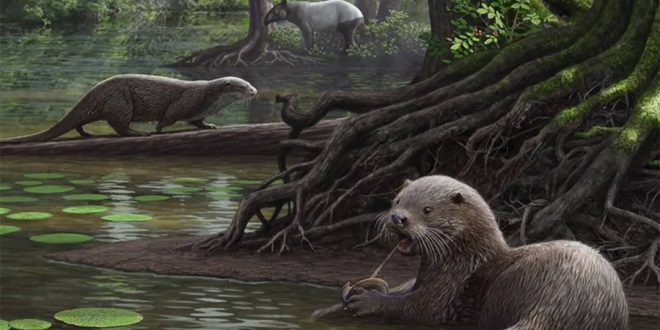 Giant otter fossil the size of a wolf discovered in China (new research)