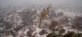 Mysterious ruby sea dragon has been caught on camera for the first time (Video)