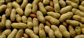 NIH: Infants should be fed peanuts to stave off allergies, Report